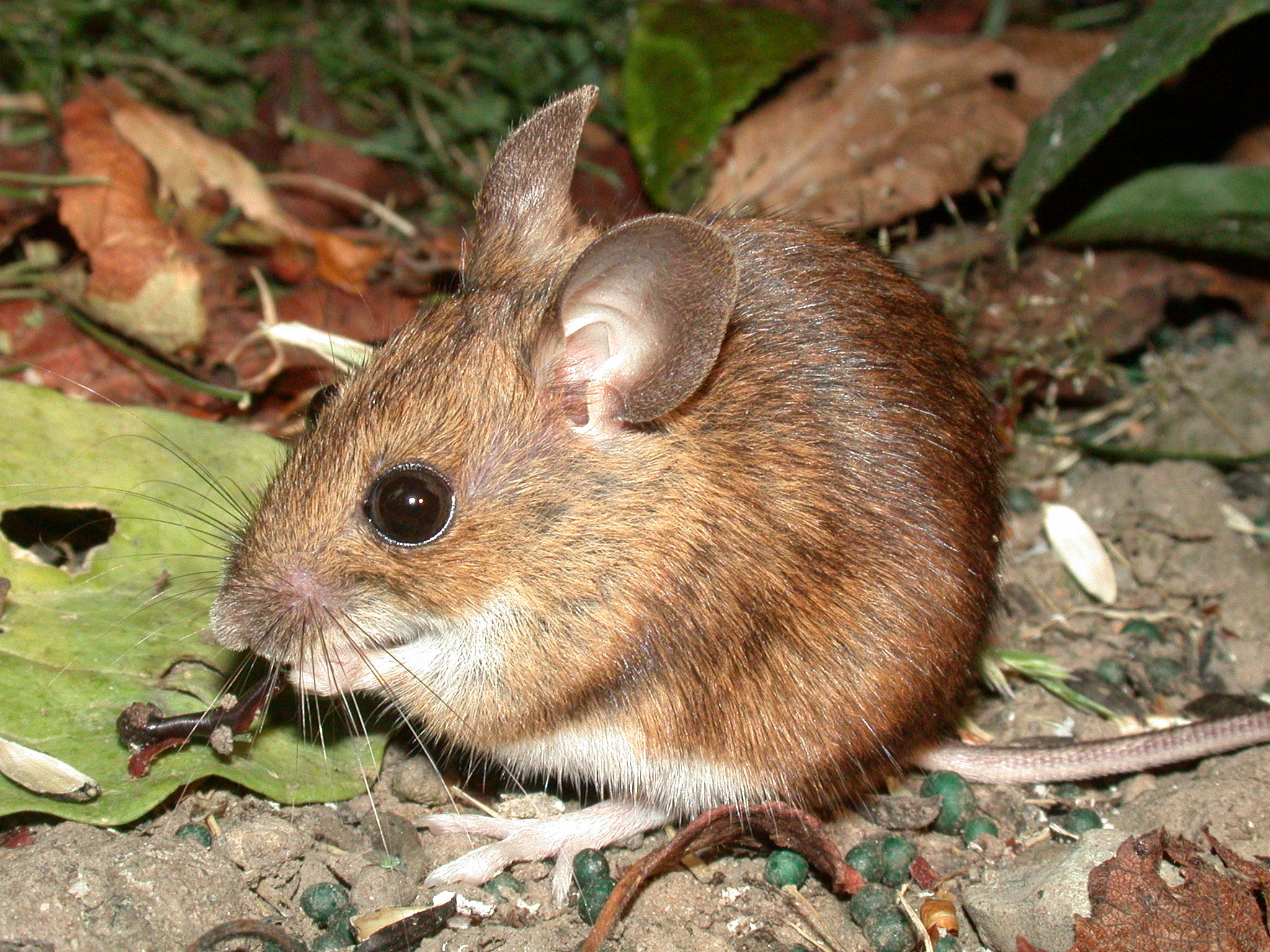 Insect Rodent Pest Control Healthy Gallatin